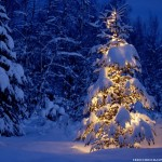 lonely-christmas-tree-1024-817436