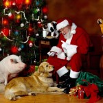 santa-claus-and-pigs-photo-1