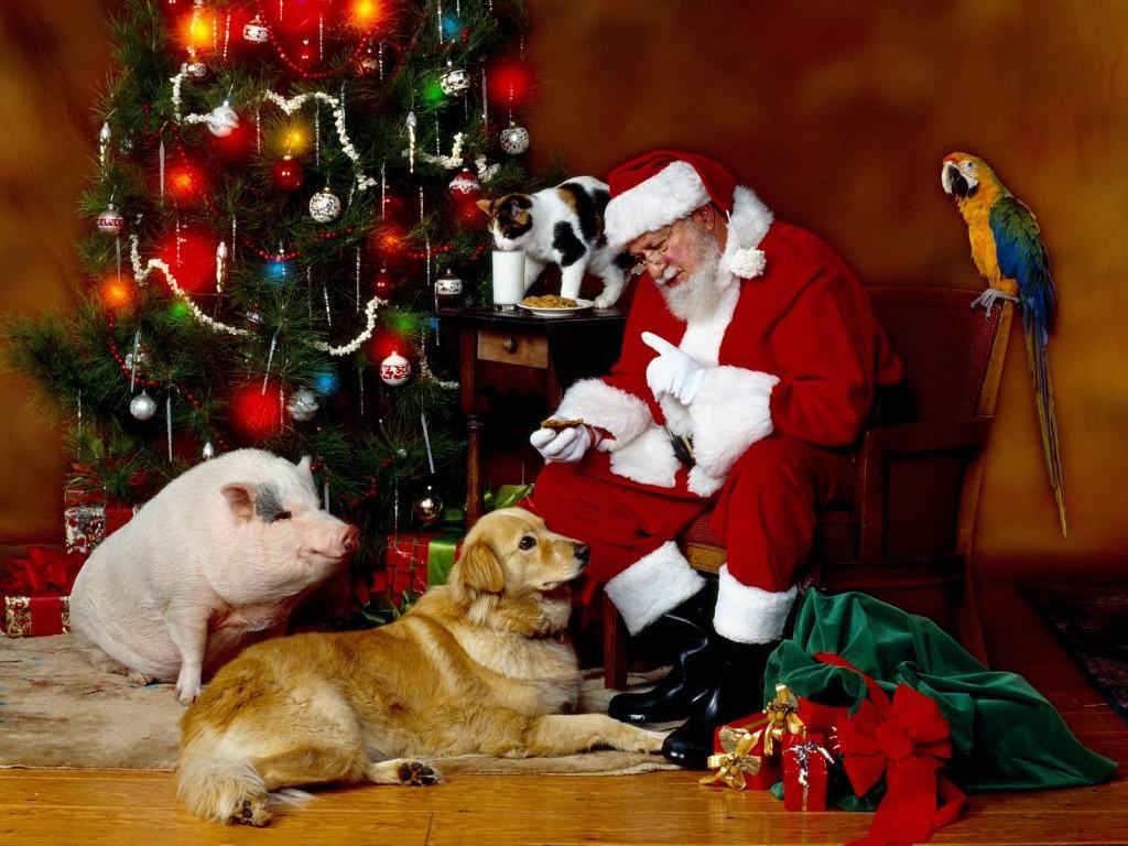 12 кучета за Коледа (2005)