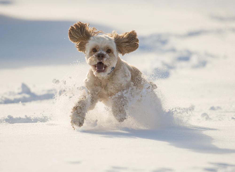 коледни песни Шаро и първия сняг